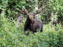 moose-hunting-temagami2