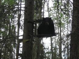 bearstand
