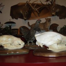 Andy's 2010 skull and 2012 skull