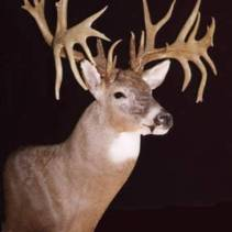 """The Jay Phankuch Buck"" taken in Ohio in 1995 with a shotgun. 27 points on an 11 point main frame."