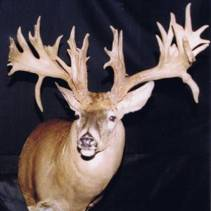 """The Beatty Buck"" taken with a compound bow by Michael Beatty in Ohio in 2000. 40 Points on a 10 point mainframe."