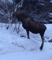 moose-wawang-lake (2)