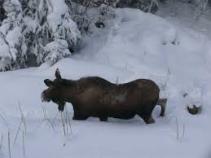 moose-wawang-lake