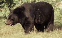 bear7