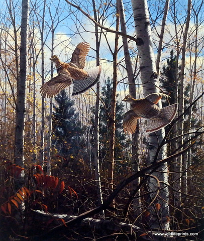 Evening_Flight-_Ruffed_Grouse_large