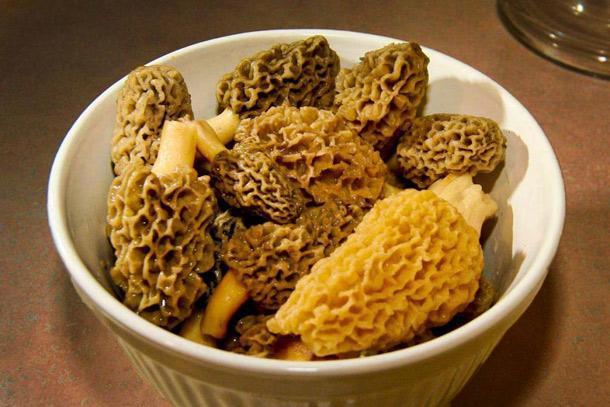 Mushroom10