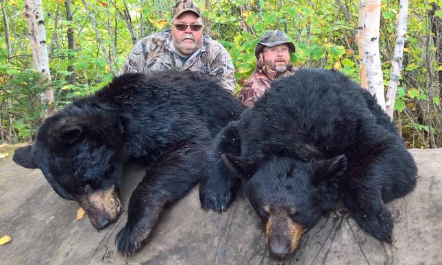 2-bear